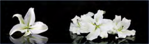 """Стеновая панель ХДФ фотопечать """"Цветы 12301"""" 610х2030х3мм"""