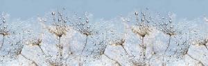 "Кухонный фартук АВС пластик ""Утренняя роса"" 600х3000х1,3мм"