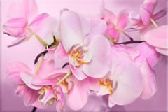 """Стеновая панель фотопечать """"Орхидеи"""" АВС 600х900х1.5мм"""