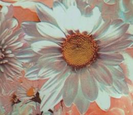 Обои, пленка самоклеющаяся 45см х8м 2169 свадебные цветы